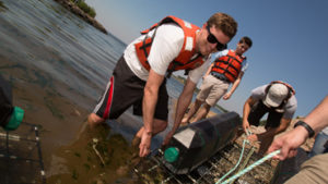 Oyster Restoration in NY Harbor
